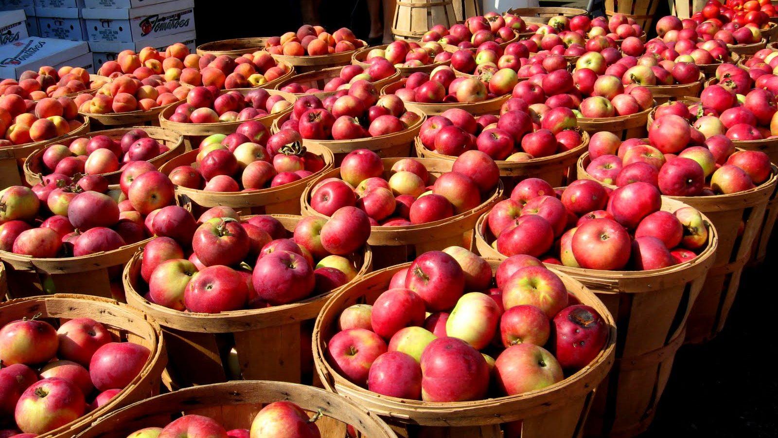 Урожай-яблок