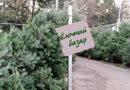Живые ели в Орше начнут продавать 22 декабря