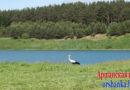 Где разрешено купаться в Оршанском районе