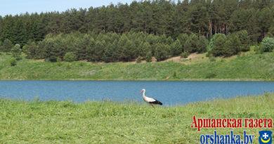 Оршанцев приглашают присоединиться к уборке береговых линий озер
