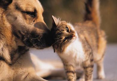 Ждем на конкурс фото ваших домашних животных