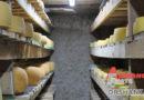 Интересное приграничье: репортаж из авторской сыроварни под Смоленском (+фото)