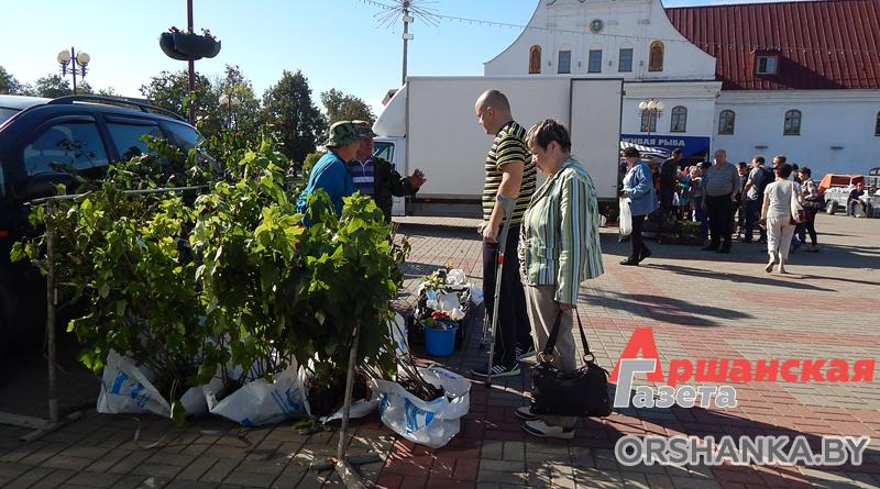 В субботу в Орше начнется сезон осенних ярмарок