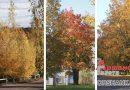 Золотая красота: осенняя фотопрогулка по Орше и району