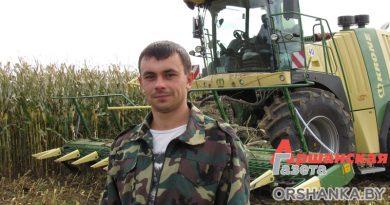 В Оршанском регионе убирают кукурузу: осталось меньше трети площадей