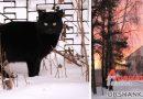 Холодно, но красиво: фотопрогулка по заснеженной Орше