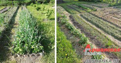 Легче предупредить: простые методы защиты растений от болезней и вредителей