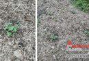 Преимущества мульчирования: поможет восстановить плодородие почвы, повысит урожайность плодовых и овощных культур