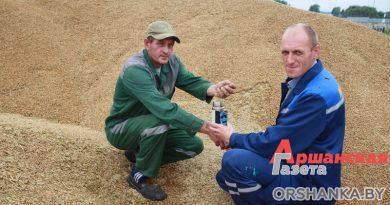 Как сушат зерно нового урожая