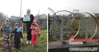 Кленовую аллею посадили в парке семейных деревьев в Орше | фото