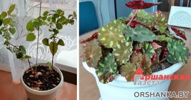 Как «оживить» комнатные цветы после зимы