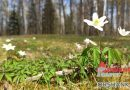 Радуемся весне! Заглянули в Инстаграм оршанцев