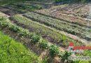 10 секретов хорошего урожая