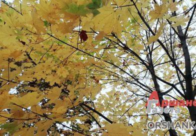 Осенние пейзажи или Как оршанские коммунальники убирают листья   видео