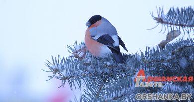 Фотопрогулка по зимней Орше