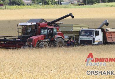 В Оршанском районе приступили к уборке урожая