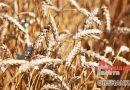 Первый сельскохозяйственный кластер появится на Оршанщине