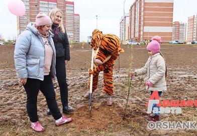 Парк для мамы появился по ул. Анатолия Соляникова в Орше
